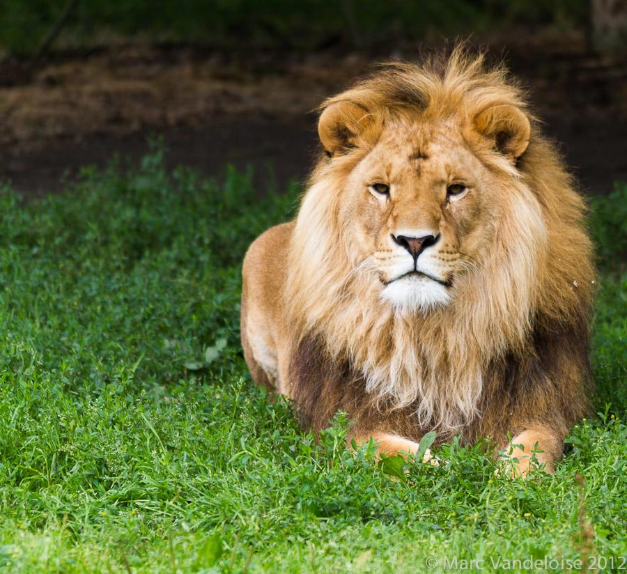 Sortie au Zoo d'Olmen (à côté de Hasselt) le samedi 14 juillet : Les photos 7573001586_d873fc9c71_o