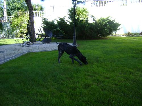 Os meus Caninos!! 6466689409_a44b3e5efb