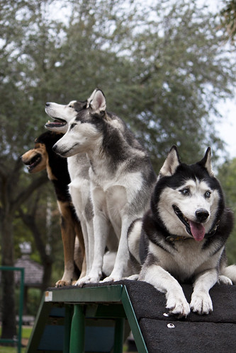 Florida Huskies and the NEW addition 9/5/13 - Page 5 6680143639_1ae91c3b8b