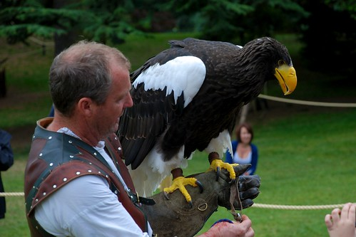 Comparação do tamanho de águias  com relação ao homem. 6595512541_b76a95fee2