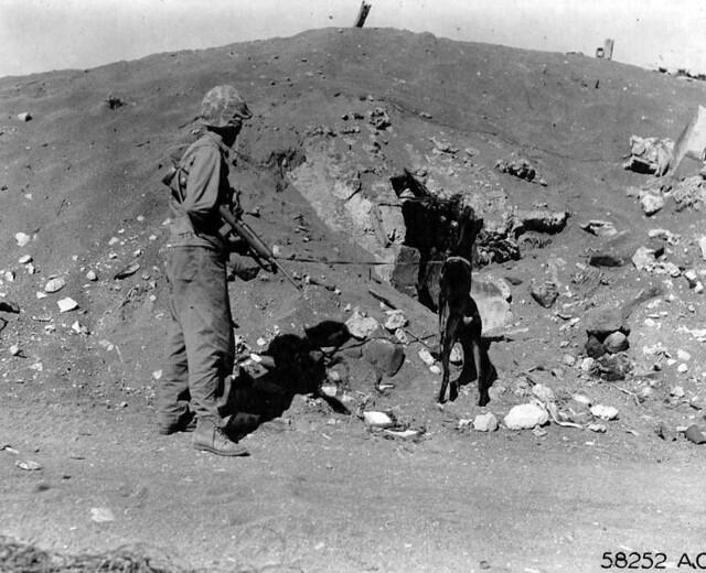 Devil's Dog : Les chiens de l'USMC dans le Pacifique  6459759185_21f838f06a_z