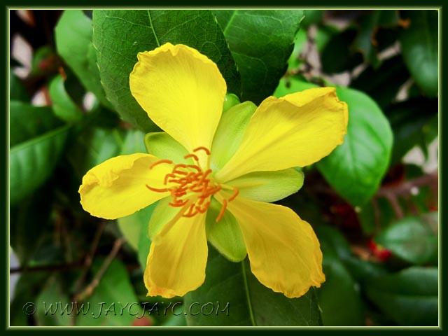 la fleur de Martin du 13 juin trouvée par Martine - Page 3 6851002187_ce27bbe2af_z
