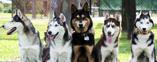 Husky Blog Thread - Page 4 6877191385_f831cf231c