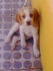 Os meus cães 6837282934_2dc36f9985_m