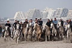 Courses, abrivados, encierros, roussatailles... site fotos 6804037608_28cfaf89b4_m