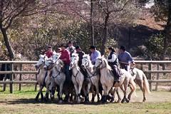 Courses, abrivados, encierros, roussatailles... site fotos 6807038824_beec2139e4_m