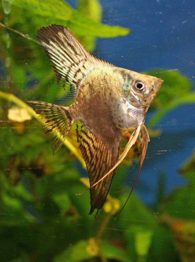 Fish from latest Spawn 7310442440_16df4b6104_b