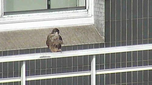 Day 47  - AK/AL on 14th floor