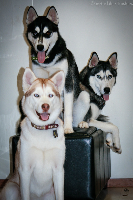 Embry, Zoey & Ares's Scrapbook! Updated *12.10* - Page 8 7674967334_6602741e22_z
