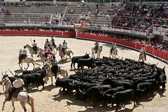 Courses, abrivados, encierros, roussatailles... site fotos 7536552144_88fb995ca3_m