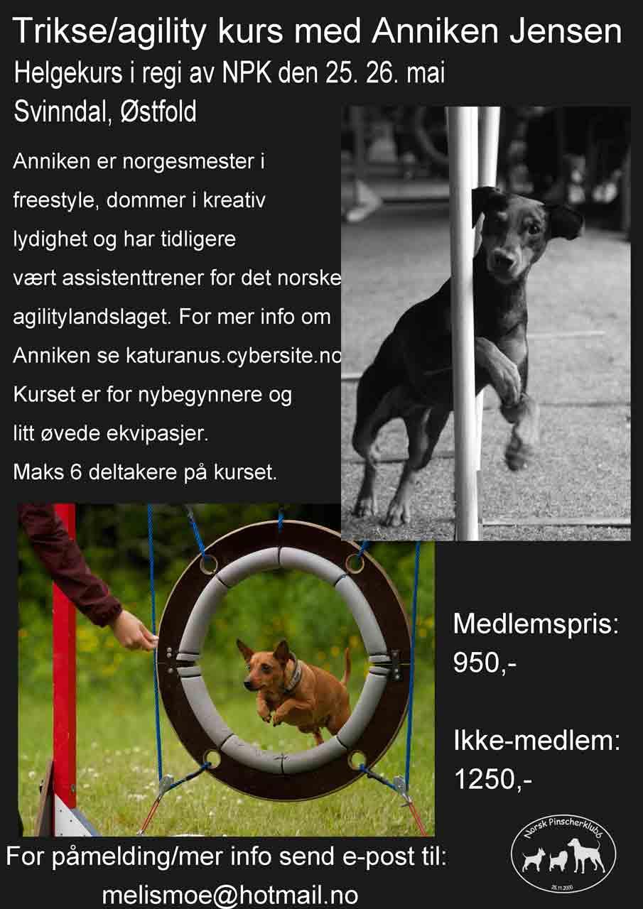 Helgekurs i triks og agility  25. og 26. mai, Svinndal i Østfold 8722108413_e999876099_o