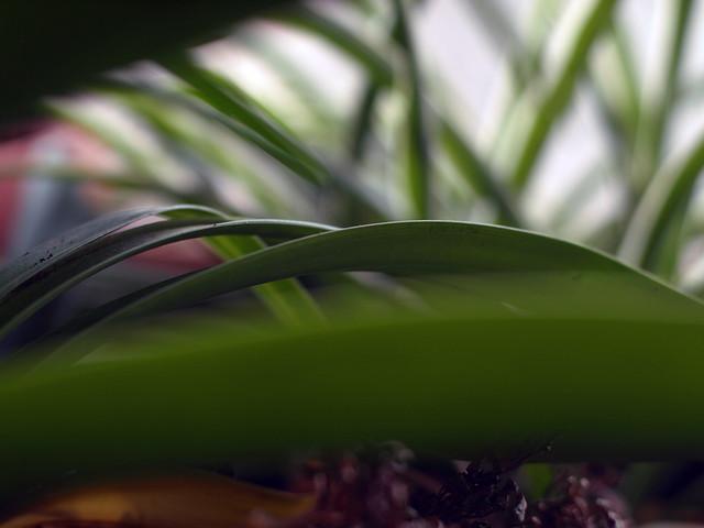 Motiv fotografiranja: Biljke, Cvijeće, Cvijet, Drveće... 11737819613_0b78607e31_z