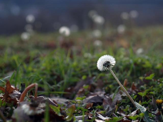 Motiv fotografiranja: Biljke, Cvijeće, Cvijet, Drveće... - Page 2 11932233214_be8fb55c71_z