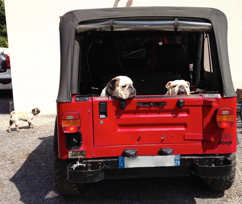 nouveau gardien de ma jeep 9418929640_021d77b229_c
