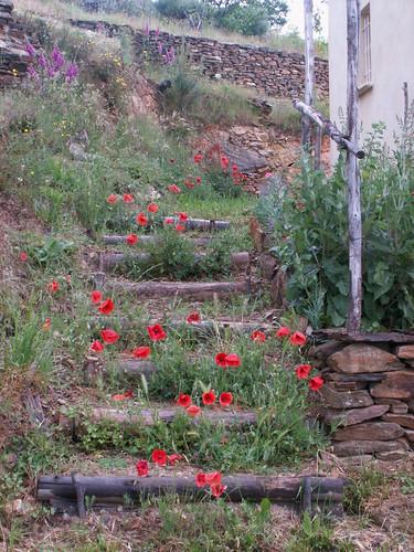 Escalier bucolique