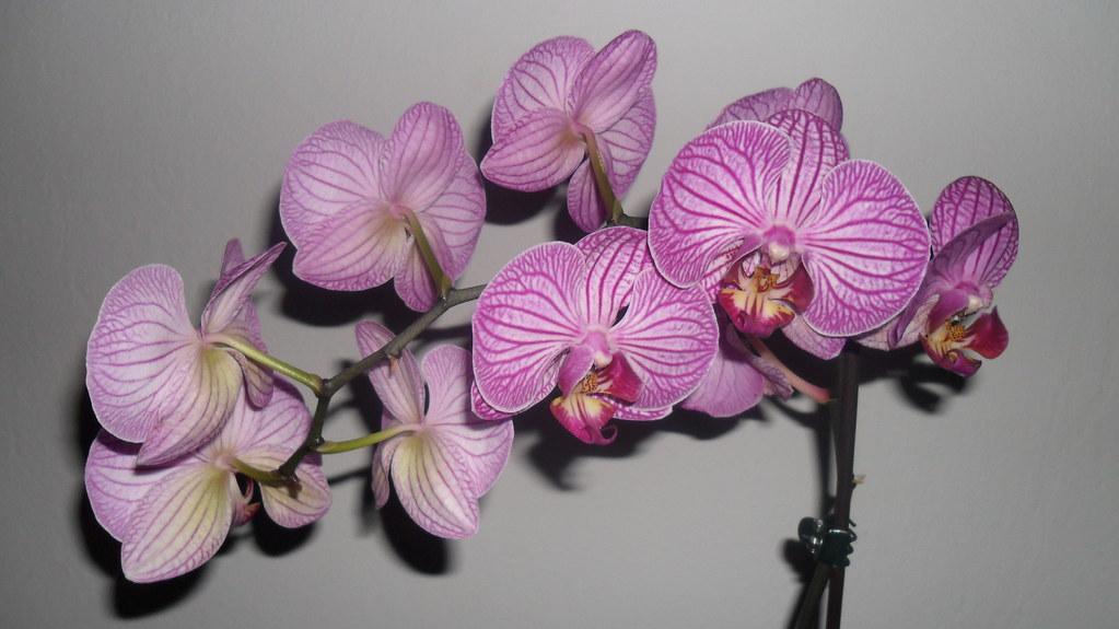 Orhideele lui Victor - Pagina 6 7155346573_644aaf5151_b