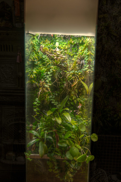 L'orchidarium de Damas - Page 11 7372453518_4eb9238102_z