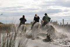 Courses, abrivados, encierros, roussatailles... site fotos 8079496324_1eda1db669_m