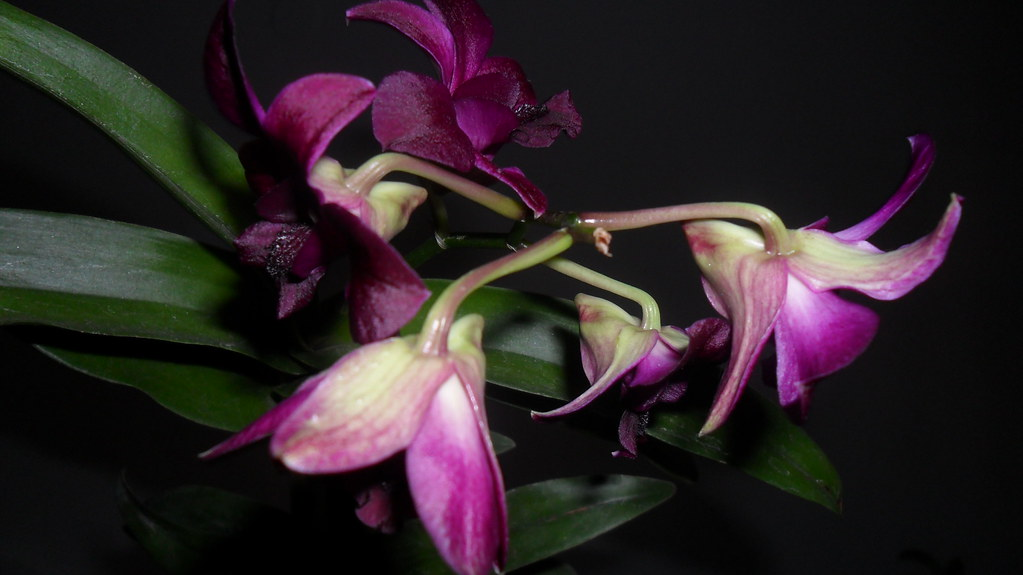 Orhideele lui Victor - Pagina 13 8115371981_0b4f1b1a6e_b