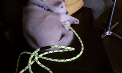 [Scrapbook] Link the Siberian Husky - Page 2 8529803624_9c1bc6ecb4_m