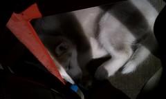 [Scrapbook] Link the Siberian Husky - Page 2 8524585917_25a8409015_m