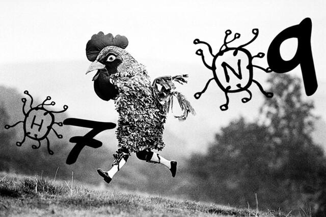 Le virus H7N9 a muté de façon favorable à une transmission d'homme à homme 8628898888_96461ced61_z