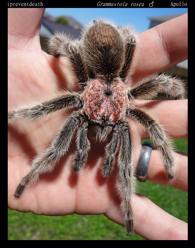 Your Tarantula and Spider pix.... - Page 3 8845580166_7ff56b1b3c