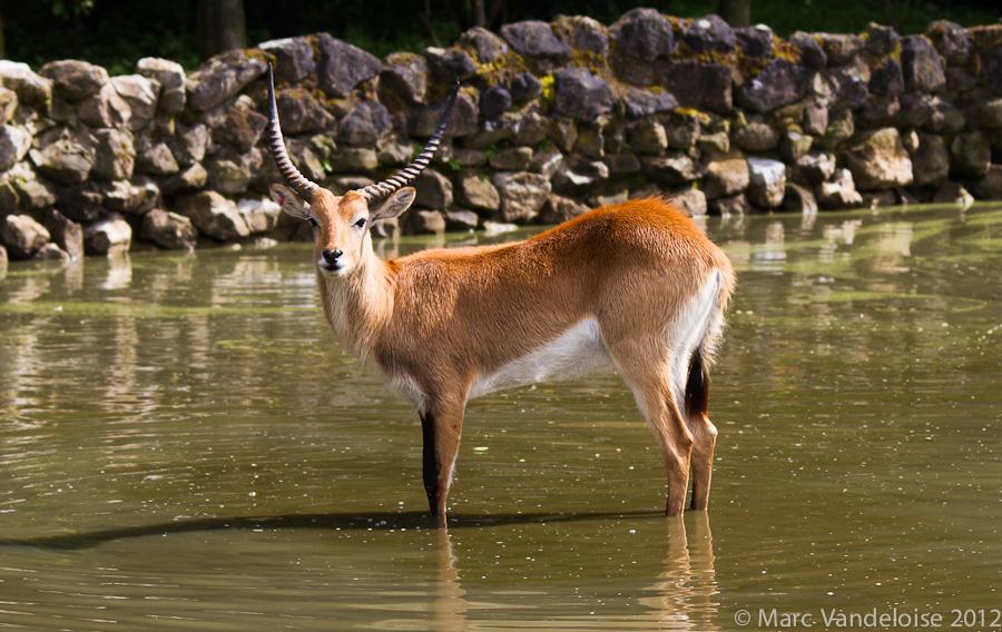 Sortie au Zoo d'Olmen (à côté de Hasselt) le samedi 14 juillet : Les photos 7573002966_ddea5a5c1d_o