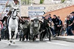 Courses, abrivados, encierros, roussatailles... site fotos 7003310184_ebc64d00ab_m