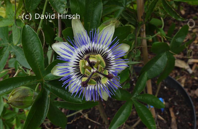 Begleitpflanzen der Kakteen in Haus und Garten - Seite 5 7421934450_0f9d625c10_c