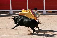 Courses, abrivados, encierros, roussatailles... site fotos 7139897677_36635c8e18_m