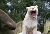 Sortie au Zoo d'Olmen (à côté de Hasselt) le samedi 14 juillet : Les photos 7573000838_0b2d0bf423_t