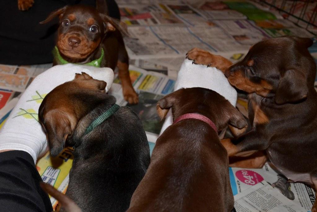 En liten familieforøkelse :) OPPDATERT s.3 med litt nye bilder! :D 8063821978_a54a811da3_b