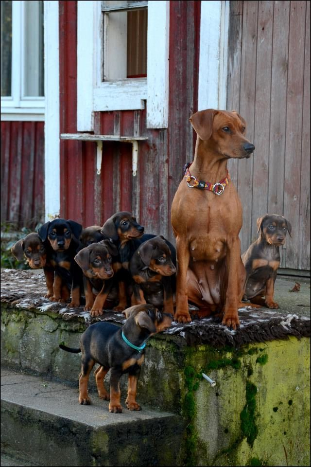 En liten familieforøkelse :) OPPDATERT s.3 med litt nye bilder! :D 8088115230_44d19d1bfb_b