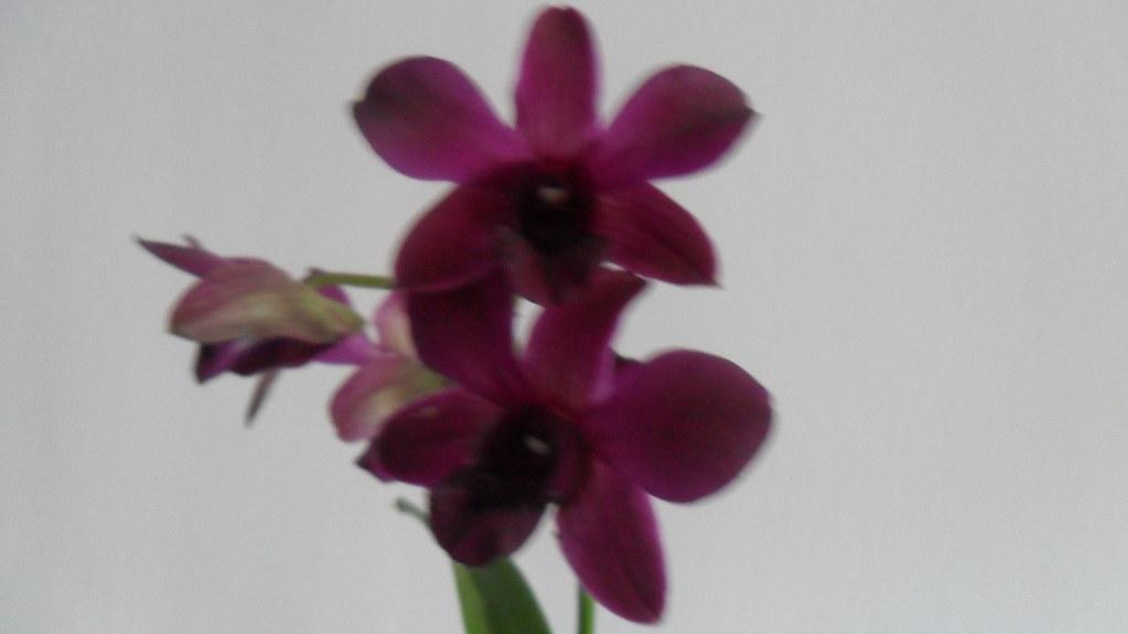Orhideele lui Victor - Pagina 13 8115458632_15c257a75b_b
