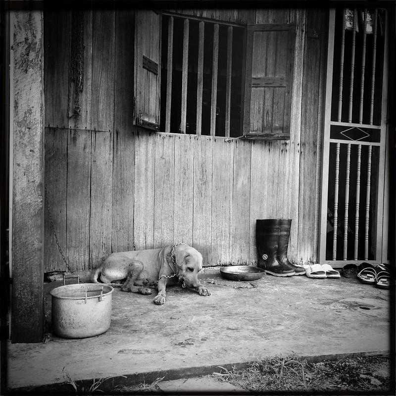 Malaysia 200 Years Old Tradition Hakas Village (Toy Camera) 8257923018_5002b32987_c
