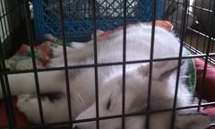 [Scrapbook] Link the Siberian Husky - Page 2 8524636889_e47dd7cba7_m