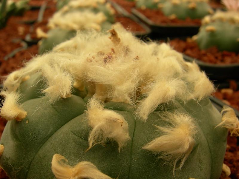 Fully woolly! 8554317362_118c79e69a_c