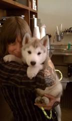 [Scrapbook] Link the Siberian Husky - Page 2 8528691935_6b62c17685_m