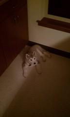 [Scrapbook] Link the Siberian Husky - Page 2 8525675088_9b2082a154_m
