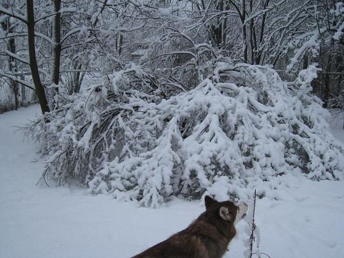 Snowstorm Pics and video 8513183446_ec4688a3d7