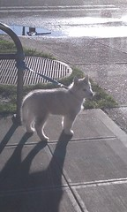 [Scrapbook] Link the Siberian Husky - Page 2 8525699598_df3c474862_m