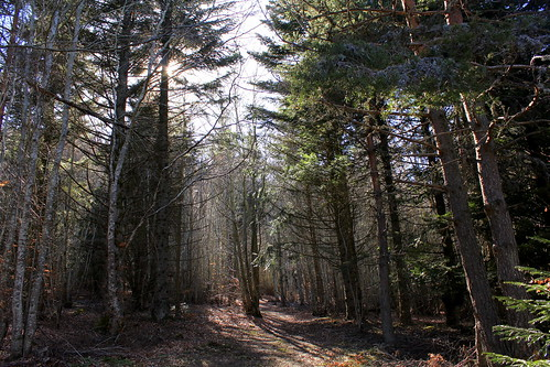 Hêtraie sapinière des Monts Breysse- 43 (14)