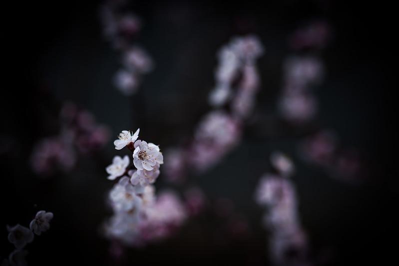 Primavera che stenta ... ma ci siamo quasi  8605846209_b7411905c2_c