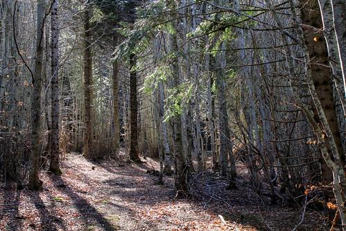 Hêtraie sapinière des Monts Breysse- 43