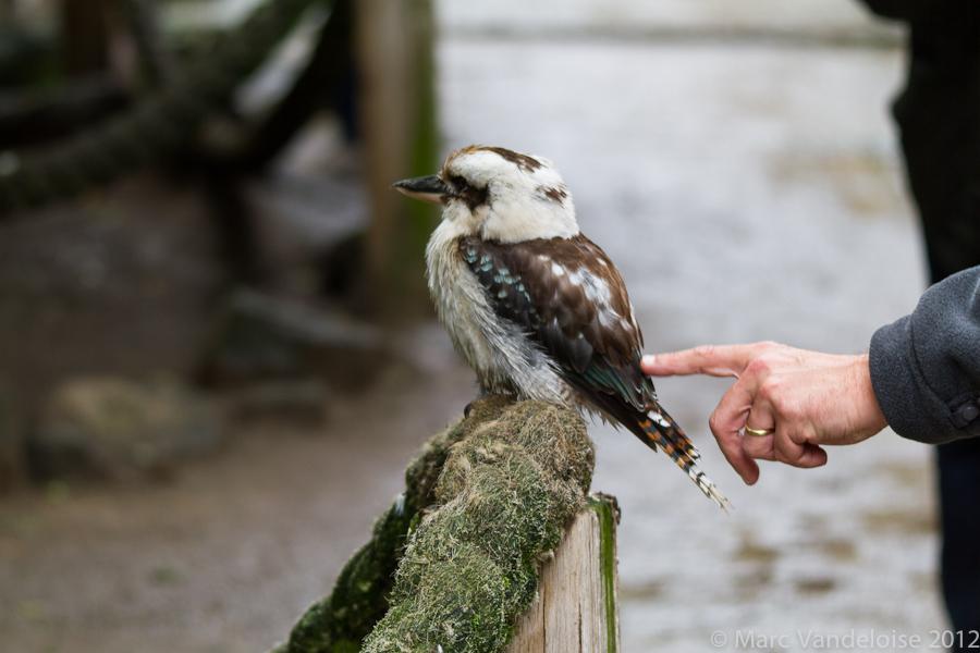 Sortie au Zoo d'Olmen (à côté de Hasselt) le samedi 14 juillet : Les photos d'ambiance 7573054086_936849b48a_o