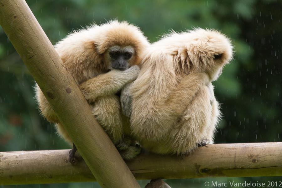 Sortie au Zoo d'Olmen (à côté de Hasselt) le samedi 14 juillet : Les photos 7573002524_e3a23c3fdc_o