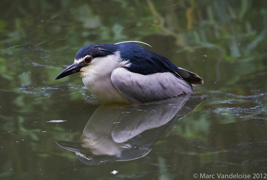 Sortie au Zoo d'Olmen (à côté de Hasselt) le samedi 14 juillet : Les photos 7573003288_8aa69c1a19_o
