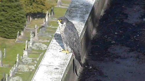 Charlie sitting on ledge