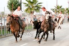 Courses, abrivados, encierros, roussatailles... site fotos 7977502142_6421b911cb_m